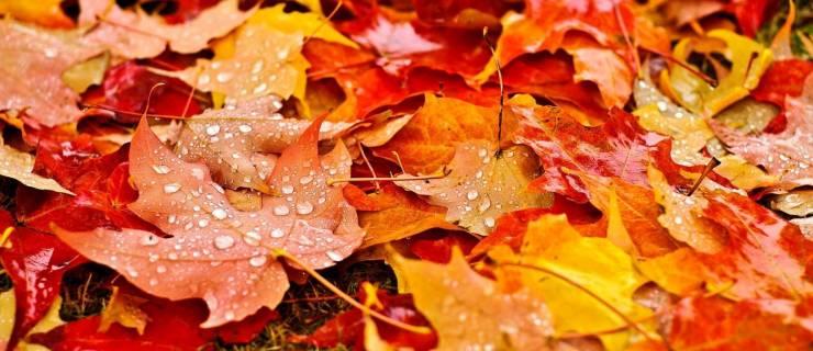 2020 Fall Meeting and Fire Season Survey